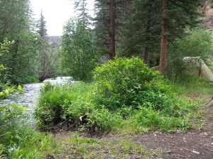 Camp Spruce