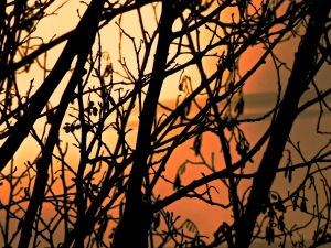 Black Branches Orange Sky by Stephanie Terrien