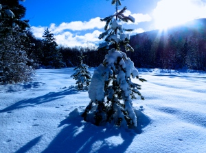 Heavy Blue Snow by Stephanie Terrien